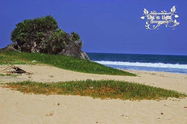 rumput pantai ngrumput