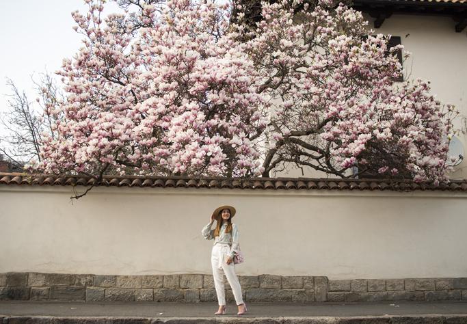 adina nanes blooming magnolias