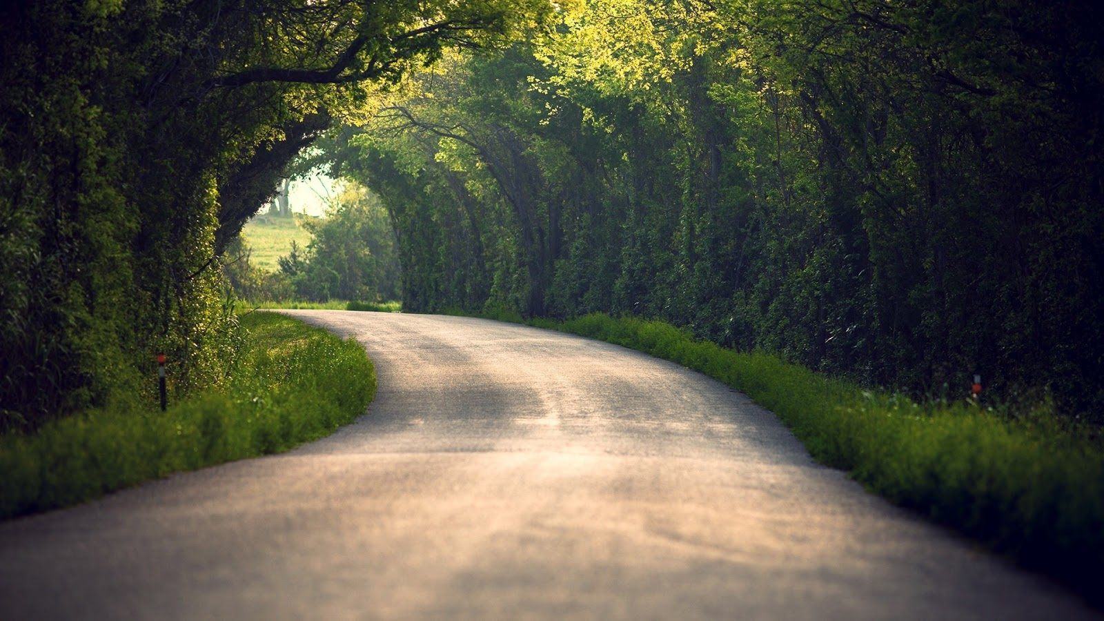 Summer Nature Road Leaves Trees Wallpaper