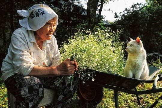 Fukumaru the cat