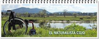 naturalista blog
