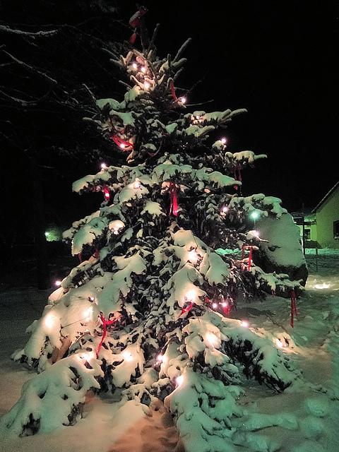 Weihnachtsbäume Zum Selberschlagen Im Bernauer Stadtwald Bernau Live