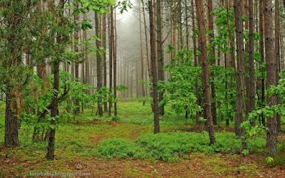 http://fotobabij.blogspot.com/2015/10/lesna-drozka-rzadko-uczeszczana.html