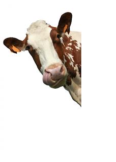 FAKTY NA TEMAT MLEKA KROWIEGO; mleko krowie zakwasza organizm, niezdrowe mleko krowie, alergizujące działanie mleka krowiego