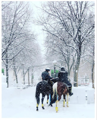 http://minnesota.cbslocal.com/2016/02/02/st-paul-mounted-officers-fare-well-in-snowy-streets/