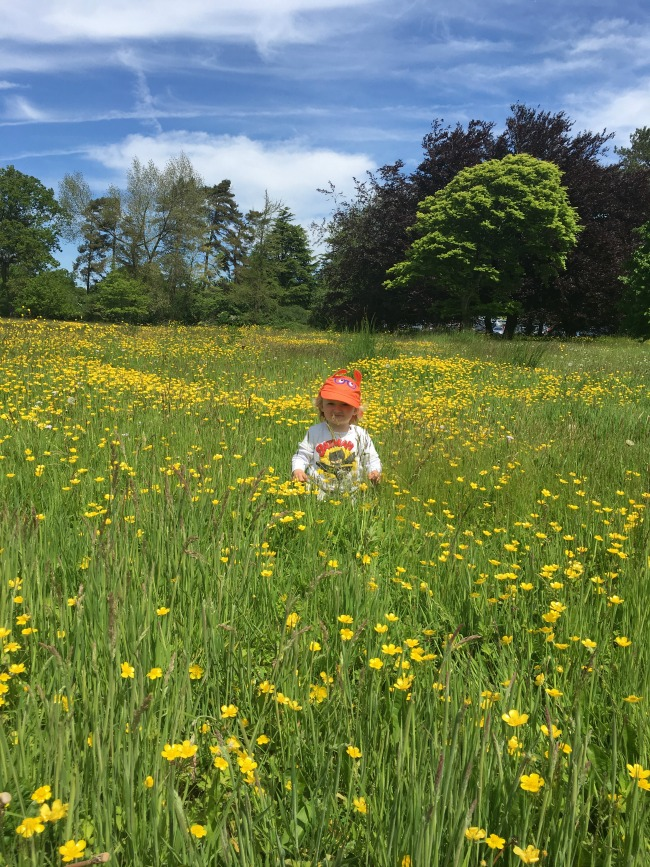 toddler-stood-in-buttercup-field-Dyffryn-Gardens