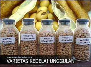 Nama nama Varietas kedelai unggulan di Indonesia