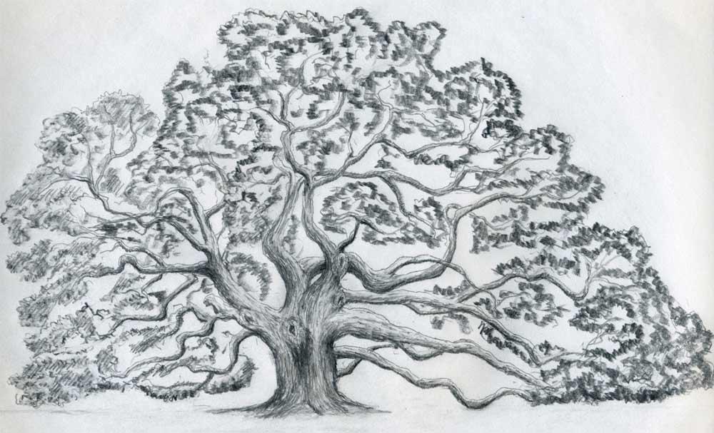 Tree Drawing ~ 3D Drawing