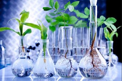bioteknologi makanan,  makalah bioteknologi,  pengertian bioteknologi  bioteknologi modern  bioteknologi konvensional,  artikel bioteknologi,  bioteknologi pertanian,  bioteknologi ppt
