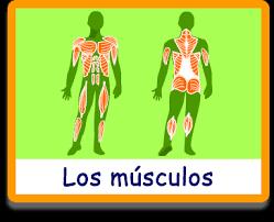 https://www.juegosarcoiris.com/juegos/cuerpo/