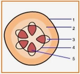 Paraziták a nasopharynxben és az orrmelléküregekben - Hpv és fehér nyelv