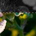 jcrop image crop in mvc asp.net