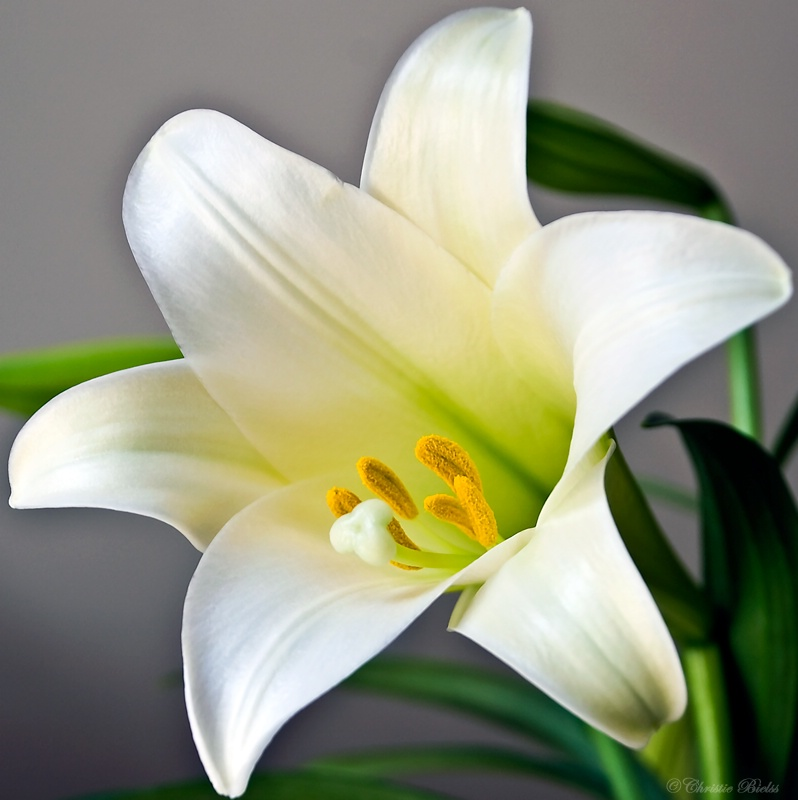 Tv Banter With Joanne Madden Seinfeld Quiz: Number 16: All About Easter Lilies