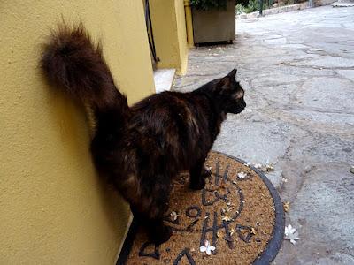 Η Φρου Φρου, μια γάτα της πόλης με χνουδωτή ουρά
