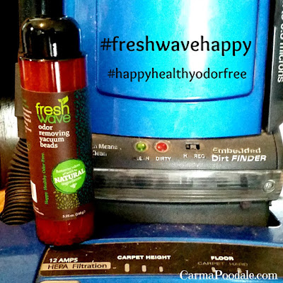 #FreshWave odor removing vacuum beads sitting on vacuum cleaner-CarmaPoodale.com