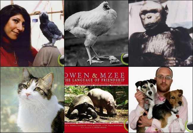 6 Video Perilaku Binatang yg paling Misterius dan Aneh di Dunia