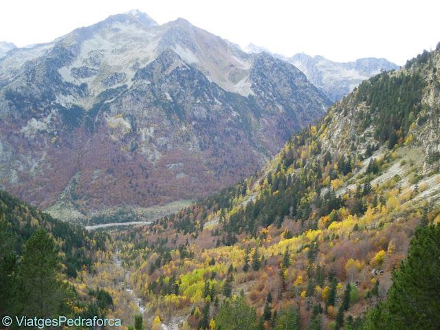 Vall de Besiberri, fageda, tardor, Alta Ribagorça, Pirineus de Lleida, Catalunya