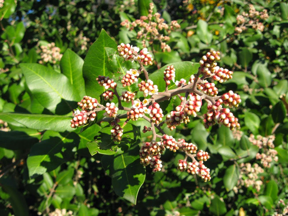 Garden Bush: A Water-wise Garden: Plant Of