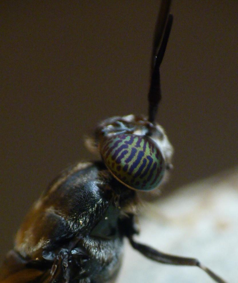 Catching Flies: 2011