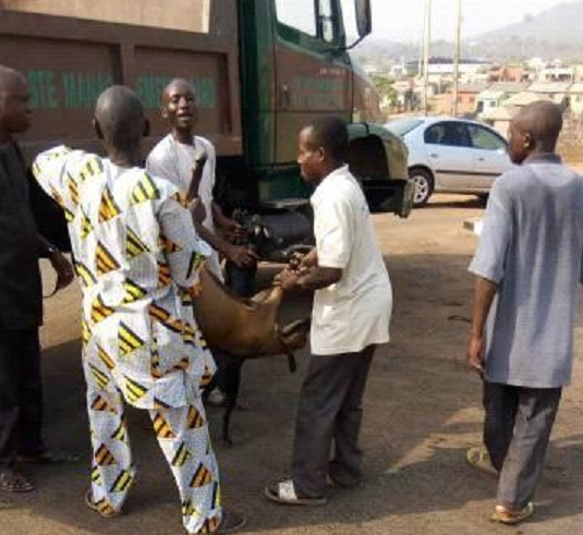 goats sheeps arrested lokoja kogi state
