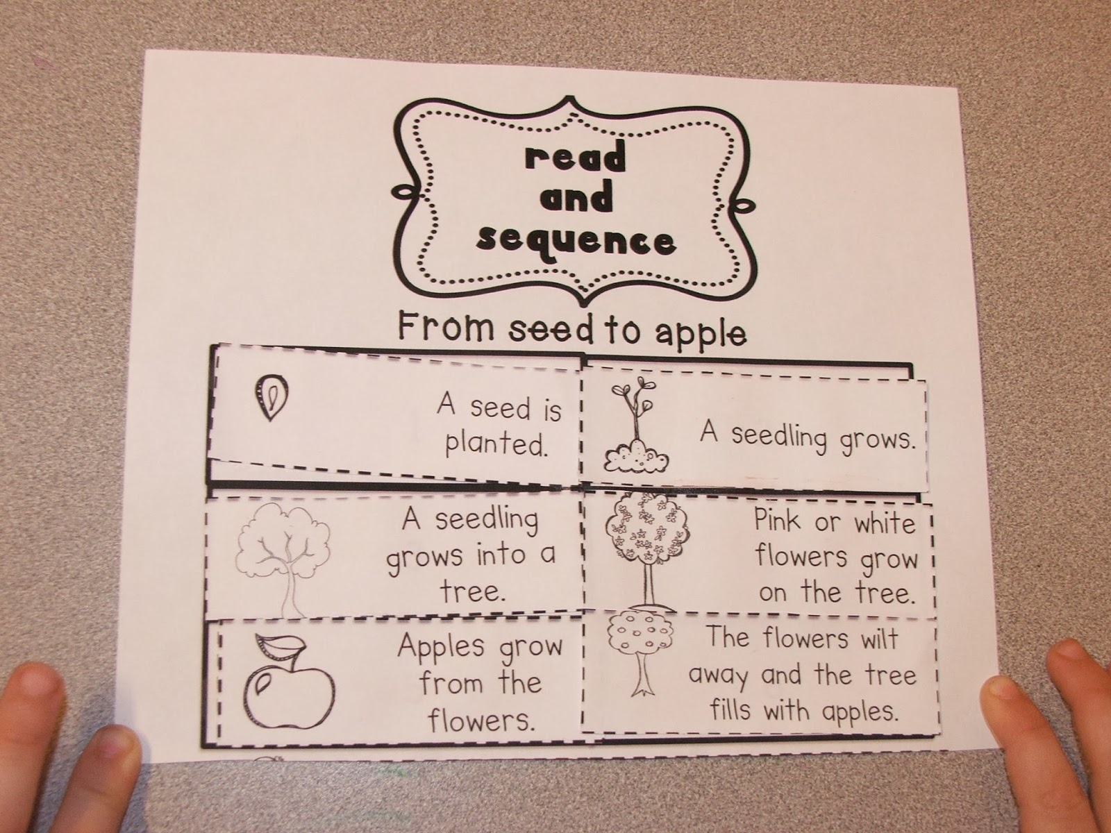 Highland Heritage Homeschool Kindergarten Apple Mania Part 3