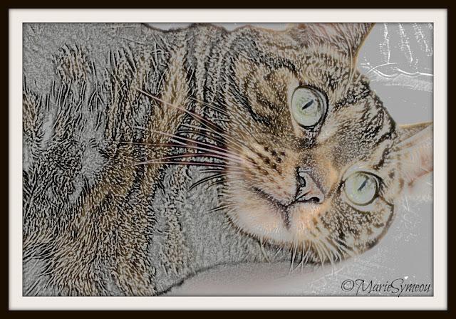 Athena cat goddess wise kitty july 2015 cat sketch altavistaventures Choice Image