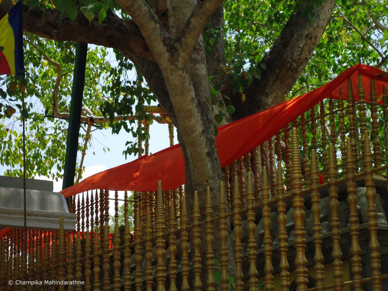 Sri Lankan Spirit Anuradhapura Sri Lanka