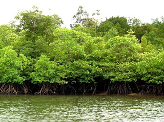 Jenis-jenis hutan dan fungsinya
