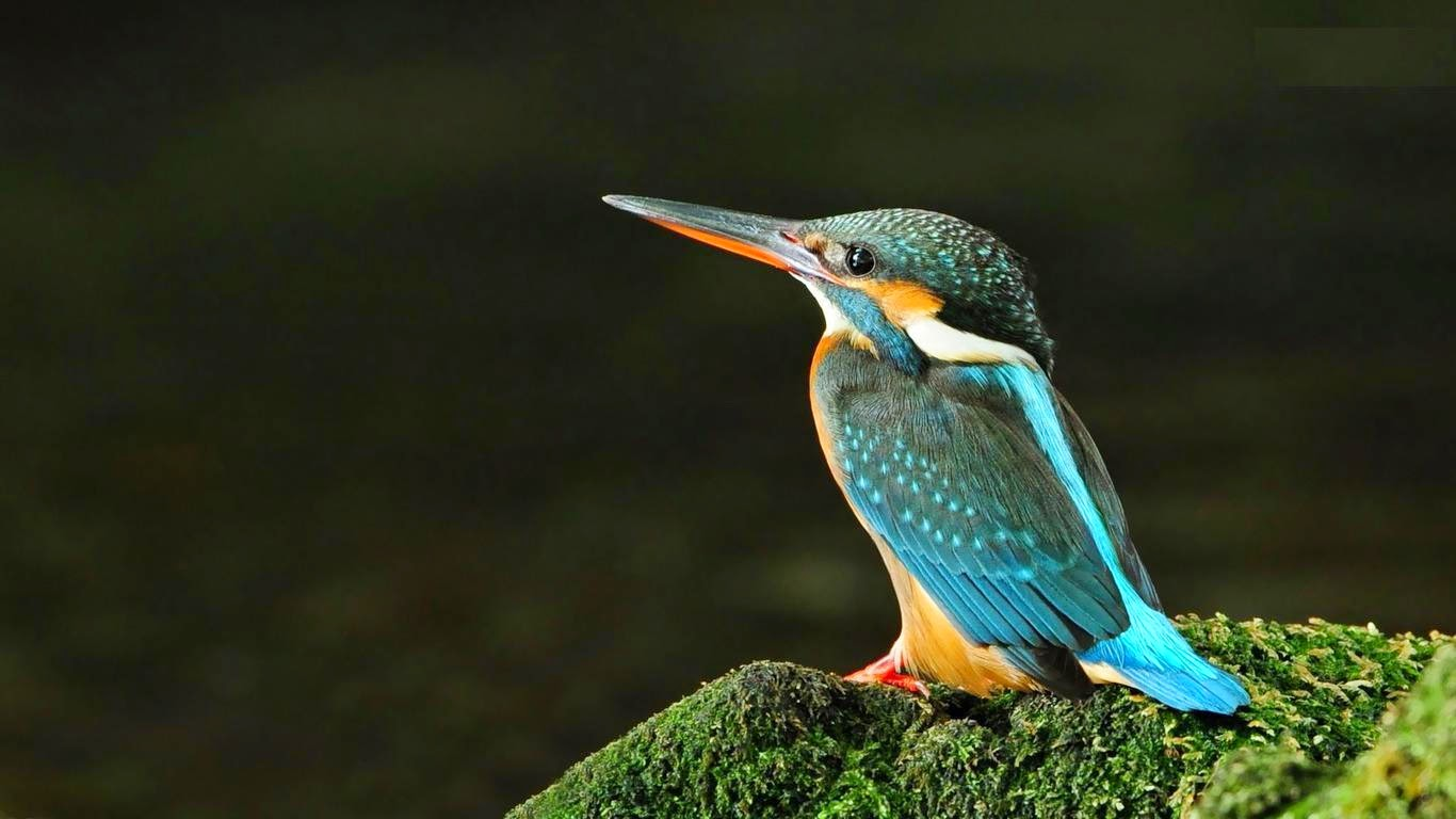 Birds HD Photos Free Download PC - Online Fun