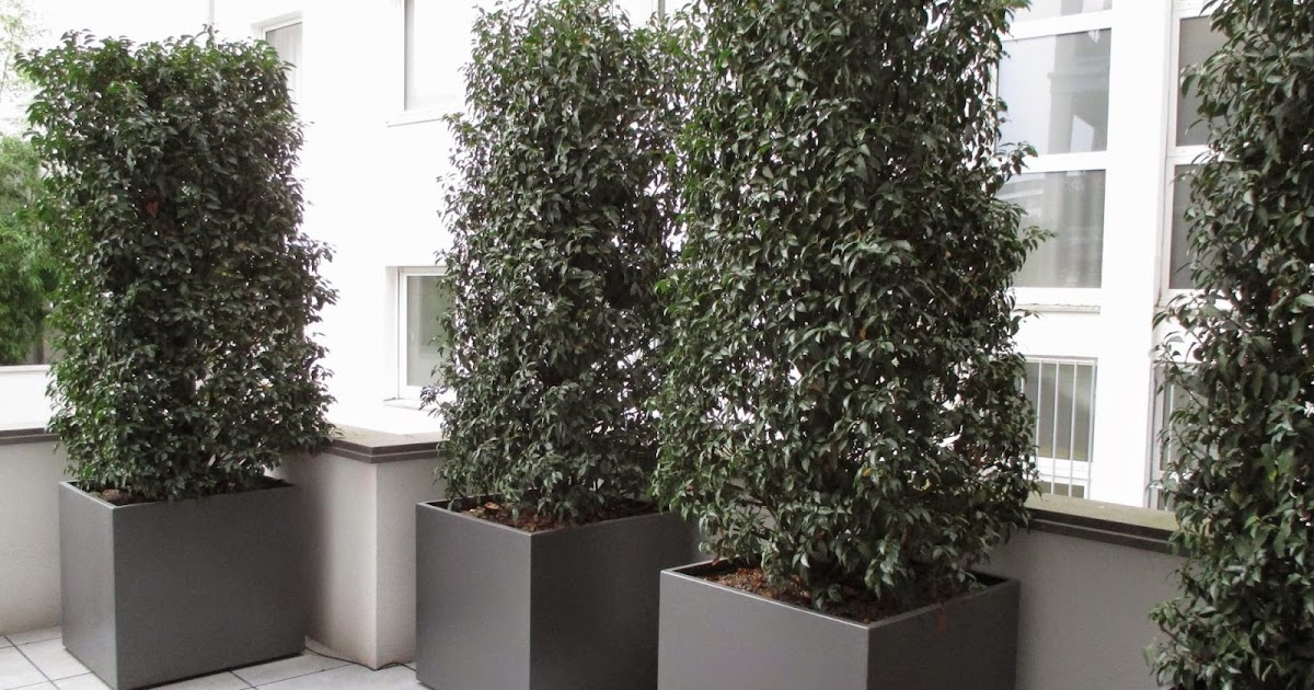 K Chenhaus K Ln fröbel metallbau pflanzkübel aus aluminium in db 703 und ral 7016