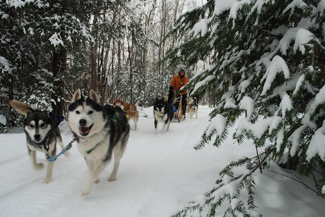Rosie And The Three Siberian Huskies