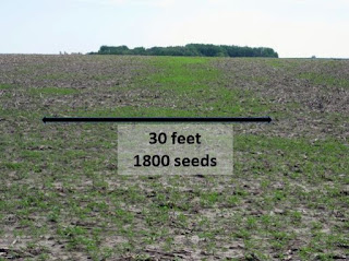 giant-ragweed-seed-spread-combine