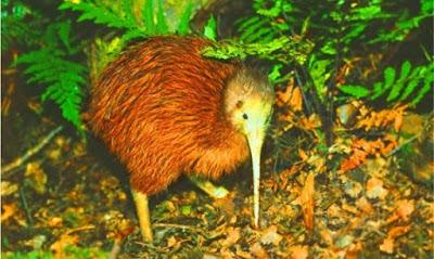 Kiwi Birdlife Park Tempat menarik di new zealand