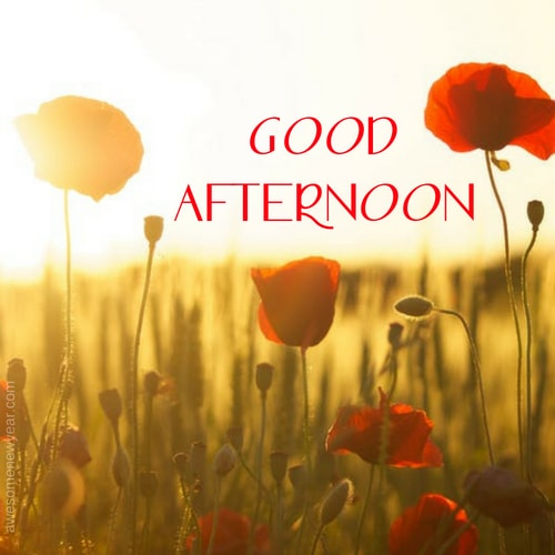 Cute Good Afternoon Wishes and Sayings With Images