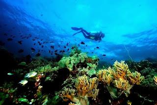 Taman laut Nasional Wakatobi