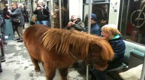 Kuda Poni naik kereta bawah tanah