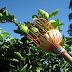 REGIÃO / Utinga recebe palestras gratuitas sobre fruticultura no mês de setembro