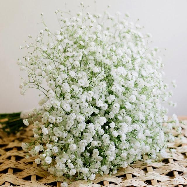 hoa baby trang