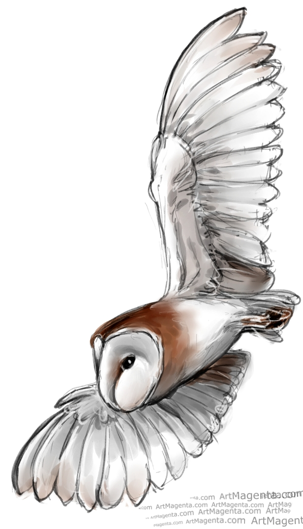Barn Owl sketch painting. Bird art drawing by illustrator Artmagenta
