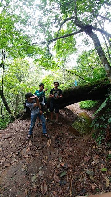jalur saat turun Gunung Pundak