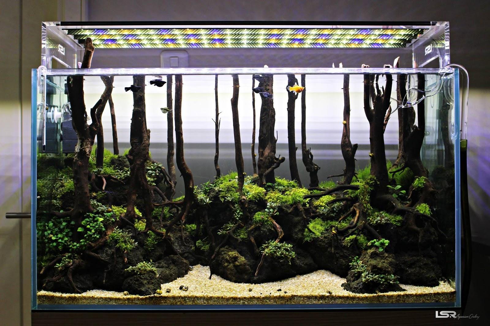 Bể thủy sinh phong cách rừng dùng lũa thẳng - Marcell Prikitiiw