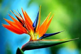 Oiseau Des Iles Fleur Idee D Image De Fleur