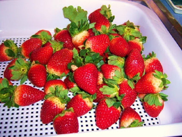 fresh strawberries being washed in a strainer that is white plastic