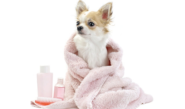 100% Cruelty Free Organic Dog Shampoo