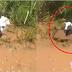 ถึงกับช็อก ! ขนหัวลุก เมื่อได้ยินเสียงวัวร้อง นอนจมอยู่ในน้ำ กำลังเดินเข้าไปช่วย แต่ทันใดนั่น ถึงกับต้องผงะ เมื่อเจอสิ่งนี้ (ชมคลิป)