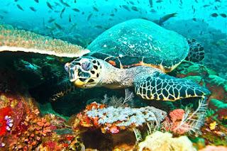 ekosistem binatang laut pulau seribu