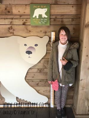 Polar Bear Height chart Colchester Zoo