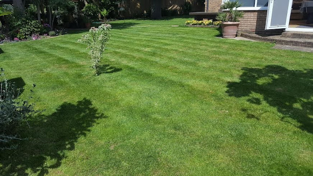 Freshly cut verdant lawn with stripes