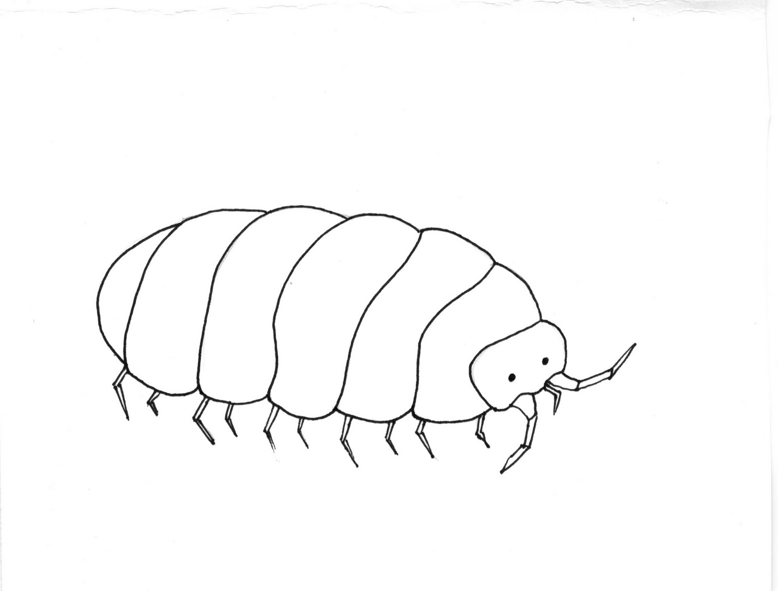 pill bug coloring pages - photo#2