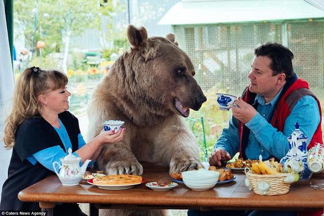 """""""Thanh niên"""" gấu 23 tuổi sống chung và làm việc nhà giúp đôi vợ chồng già"""